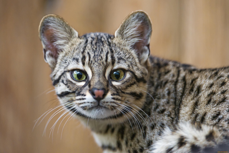 Фото всех видов кошек мира